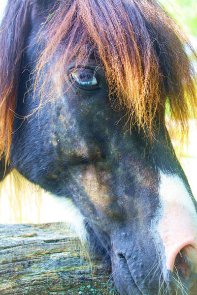 Photograph - Old Blue Eye 2 by Stacey Rosebrock