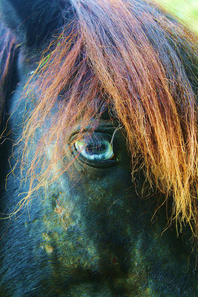 Photograph - Old Blue Eye 3 by Stacey Rosebrock