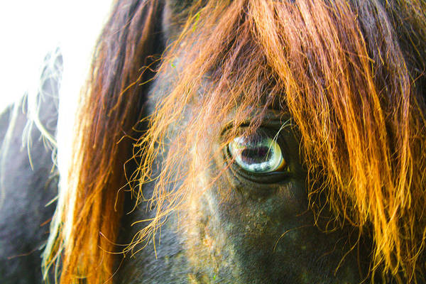 Photograph - Old Blue Eye by Stacey Rosebrock