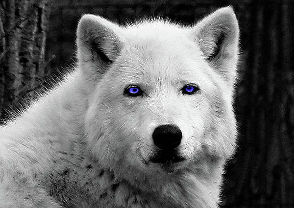 Photograph - Old Blue Eyes by Frank Vargo