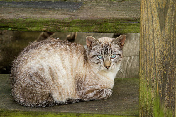 Photograph - Old Blue Eyes by Jean Noren