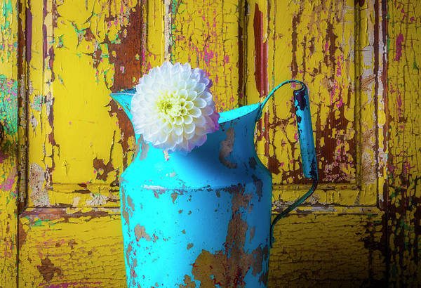 Wall Art - Photograph - Old Blue Pitcher And Dahlia by Garry Gay