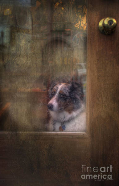 Photograph - Old Bonnie Dog by Craig J Satterlee