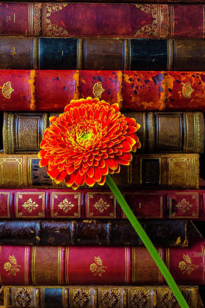 Photograph - Old Books And Mum by Garry Gay