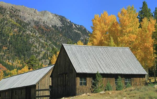 Photograph - Old Cabin In St Elmo Colorado by Dan Sproul
