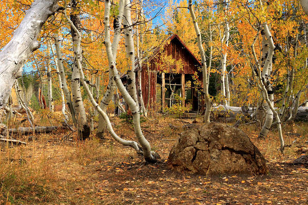 Wall Art - Photograph - Old Cabin In The Aspens by James Eddy