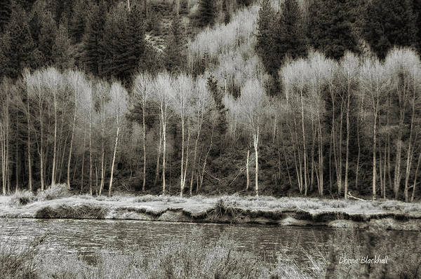Birch River Photograph - Old Country by Donna Blackhall