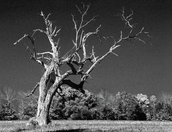 Iguana Digital Art - Old Dead Tree Again by Michael Thomas