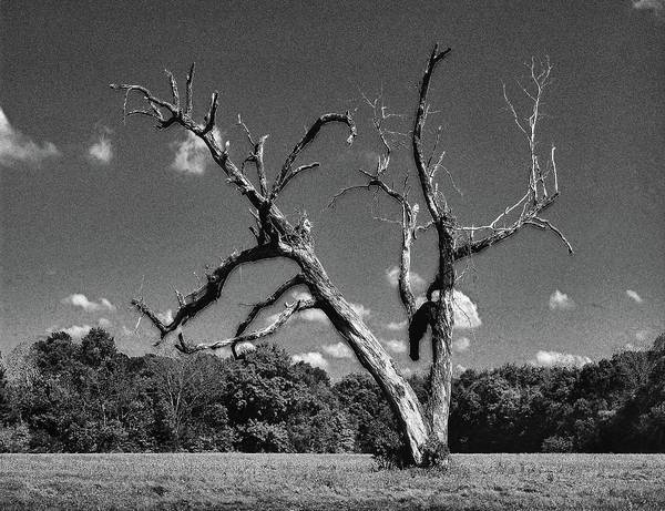 Digital Art - Old Dead Tree by Michael Thomas