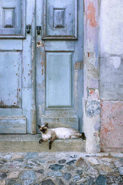 Wall Art - Photograph - Old Door With Cat by Carlos Caetano