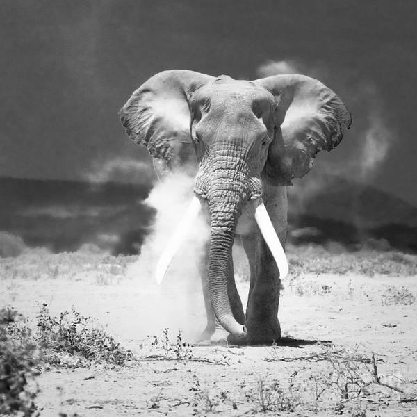 African Elephant Photograph - Old Elephant At Amboseli National Park Kenya by Konstantin Kalishko