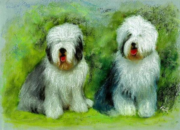 Painting - Old English Sheepdog by Ryn Shell