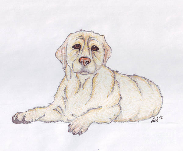 Sad Dog Drawings | Fine Art America