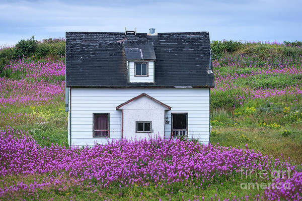 Photograph - Old Farmhouse In A Field With Fireweed Flowers by Les Palenik