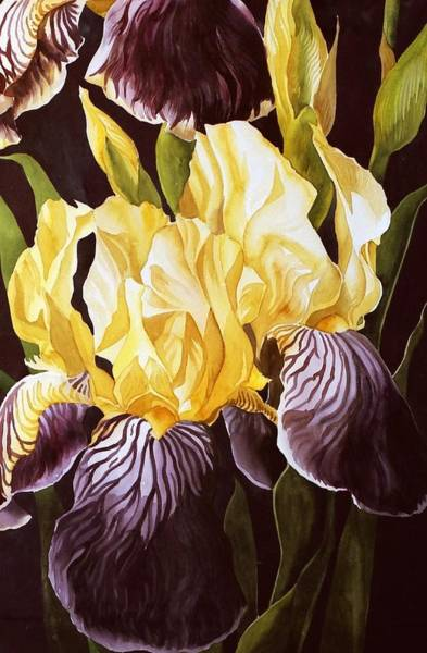 Old Fashion Iris Art Print