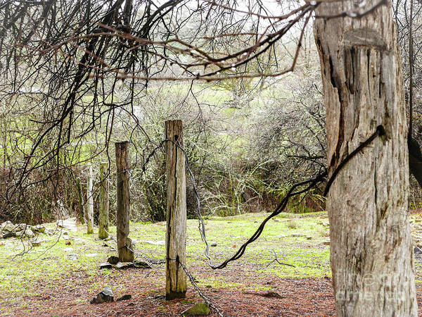 Photograph - Old Fence Posts by Lexa Harpell