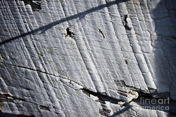 Photograph - Old Fence by Todd Blanchard