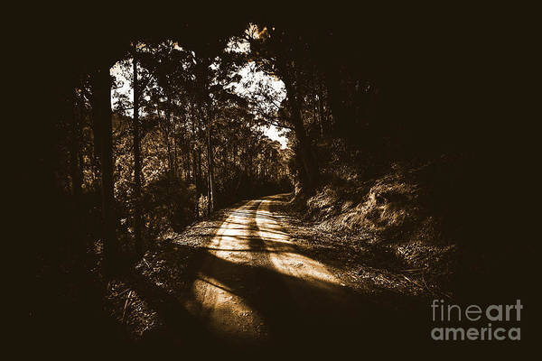 Thoroughfare Photograph - Old Forest Road by Jorgo Photography - Wall Art Gallery