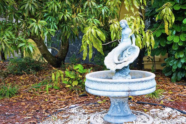Tree Wall Art - Photograph - Old Fountain by Ric Schafer