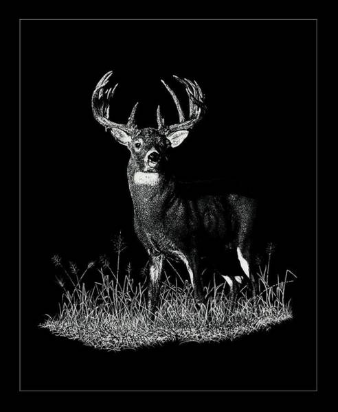 Whitetail Drawing - Old Friend by Shane Greif