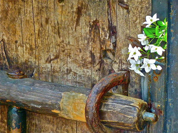 Photograph - Old Gate by Diana Hatcher