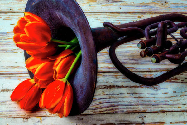 Dent Photograph - Old Horn And Tulips by Garry Gay