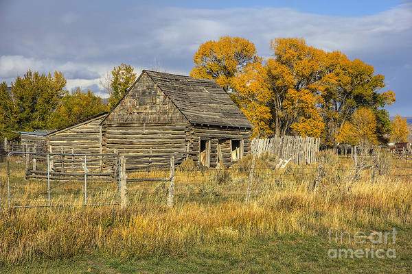 Photograph - Old Log Cabin In Woodruff by Spencer Baugh