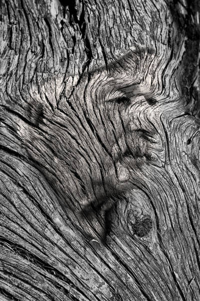 Photograph - Old Man Tree Spirit by John Williams