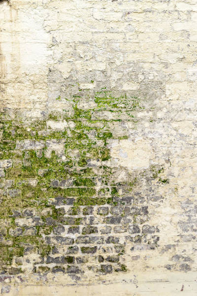 Photograph - Old Moldy White Washed Wall by John Williams