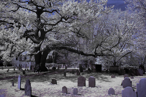 Photograph - Old Oak At Burying Point by Jeff Folger