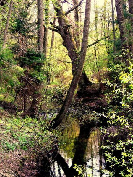 Gorecki Photograph - Old Oak by Henryk Gorecki