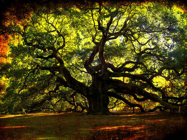 Oak Photograph - Old Old Angel Oak In Charleston by Susanne Van Hulst