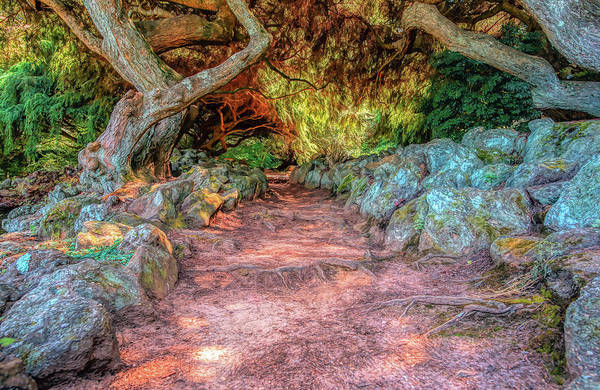 Photograph - Old Path At Deep Cut Gardens by Gary Slawsky