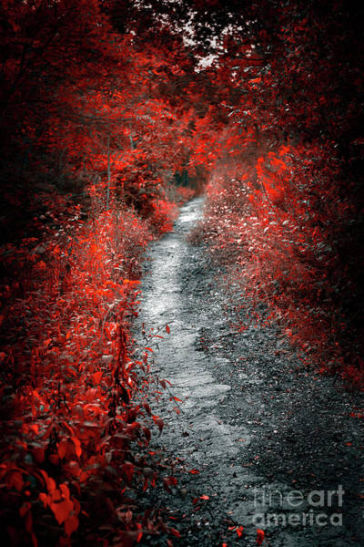 Wall Art - Photograph - Old Path In Red Forest by Elena Elisseeva