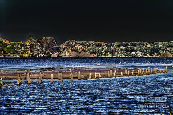 Photograph - Old Pilings At Night by William Norton