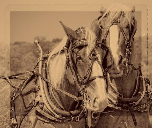 Photograph - Old Plow Team by Alice Gipson
