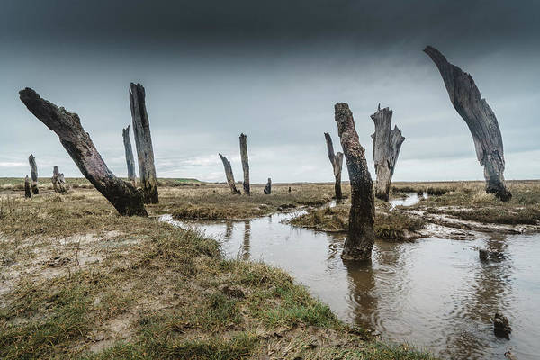 Photograph - Old Posts by James Billings