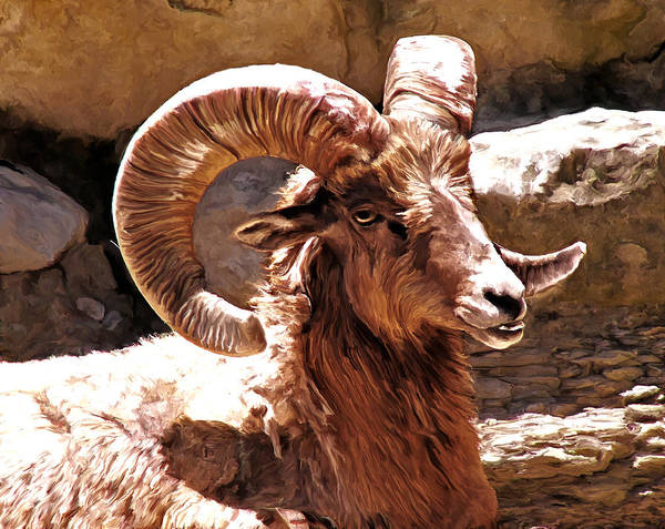 Painting - Old Ram by Rick Mosher