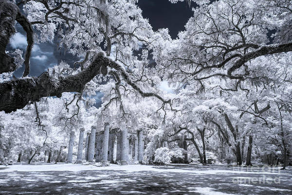 Photograph - Old Sheldon Church In Infrared by Charles Hite