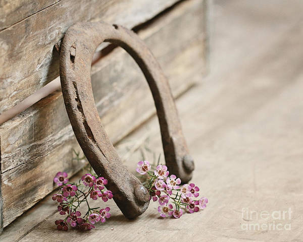 Farm Photograph - Old Shoe by Alison Sherrow