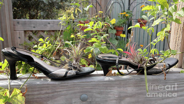 Wall Art - Photograph - Old Shoe Planters At A Botanical Garden by William Kuta