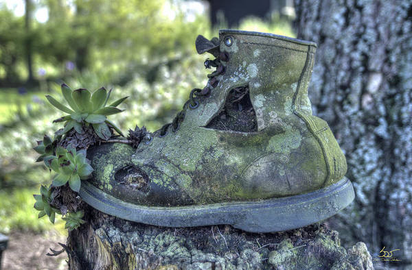 Photograph - Old Shoe With Plant by Sam Davis Johnson