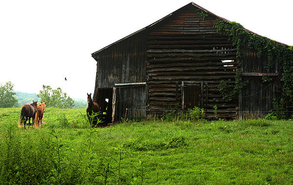 Old Stable And Horses Art Print