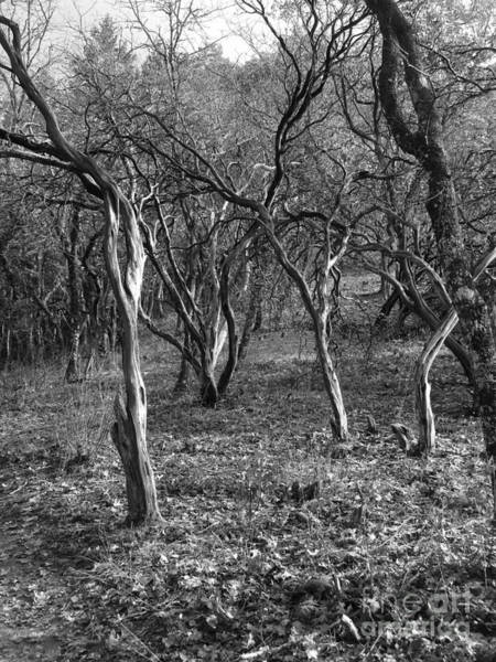Photograph - Old Stories Old Bones by Marie Neder