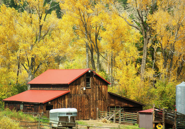 Photograph - Old Time Barn In Golden Aspens by Marilyn Hunt