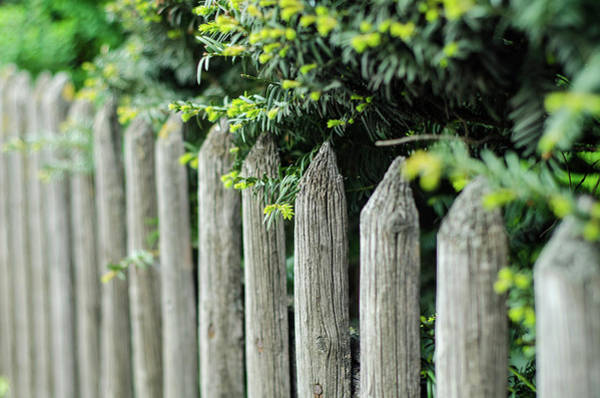Photograph - Old Time Fence by Miguel Winterpacht