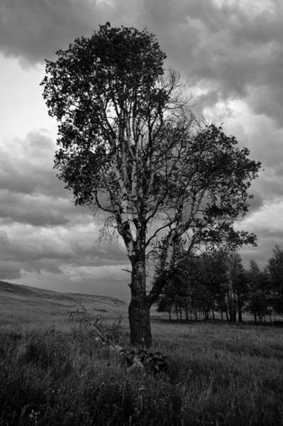 Old Tree, Lost Trail Wildlife Refuge Art Print