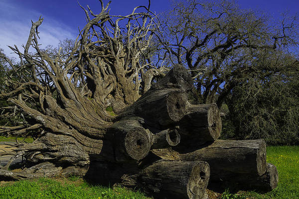 Fallen Tree Photograph - Old Tree Roots by Garry Gay