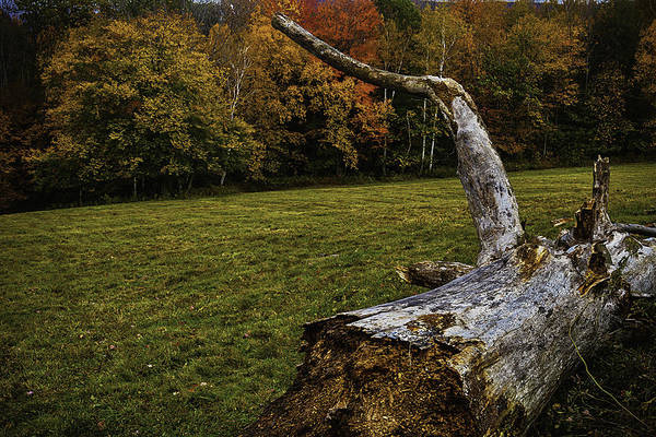 Fallen Tree Photograph - Old Tree Trunk by Garry Gay