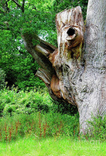 Wall Art - Photograph - Old Tree Trunk by Tom Gowanlock